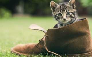 Как убрать запах кошачьей мочи с обуви: кожи, замши