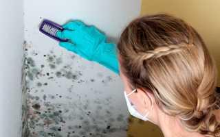 Средство от плесени и грибка на стенах в квартире