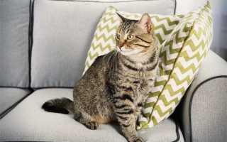 Чем убрать запах кошачьей мочи в домашних условиях