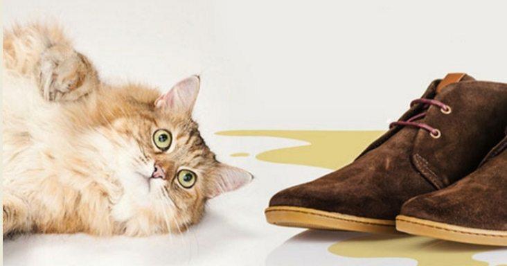 Запах кошачьей мочи из обуви