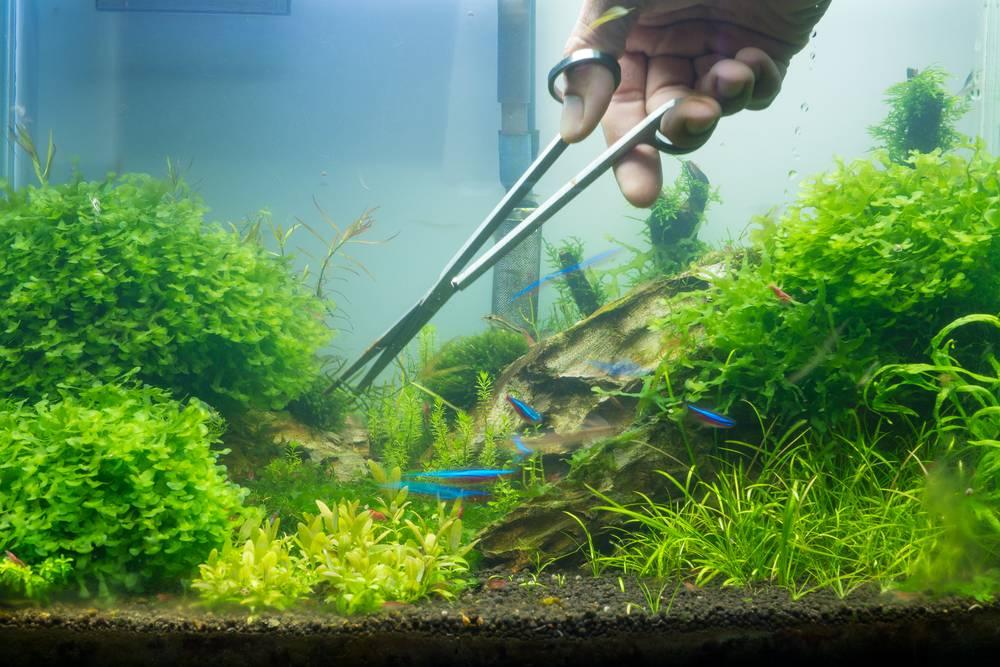 Уход за растительностью аквариума