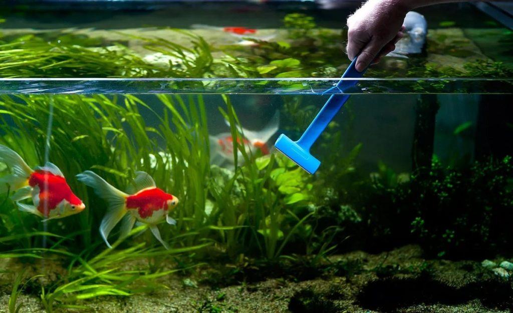 Почистить аквариум